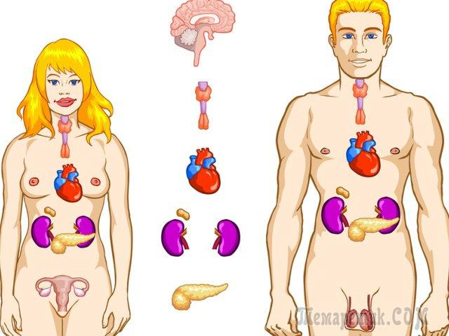Витамины для набора веса: еда и препараты